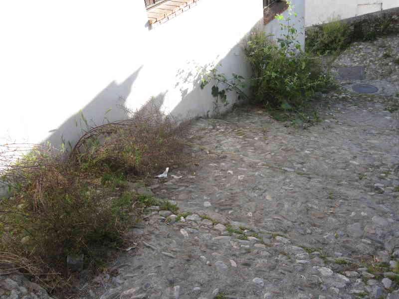 Hierbas en la calle Beteta_Zenete 2014