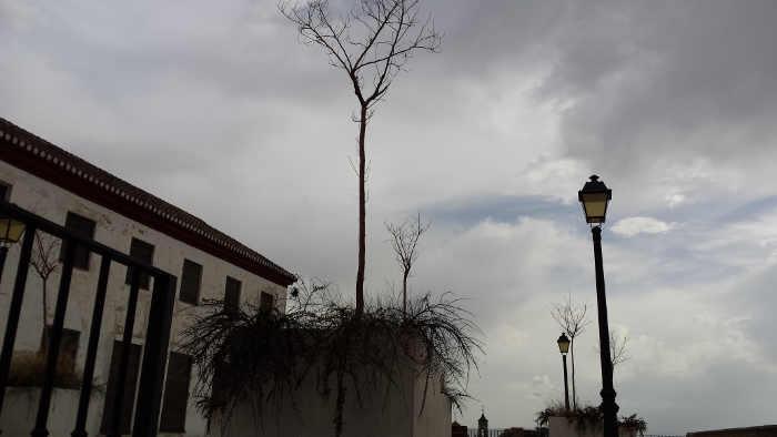 Arbolado y plantas secas y abandonadas en la Placeta Álamo del Marqués. 2014
