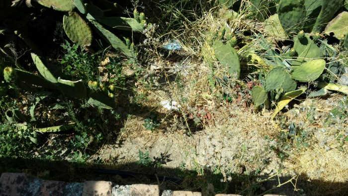 Aljibe del Zenete 2014 Jardín