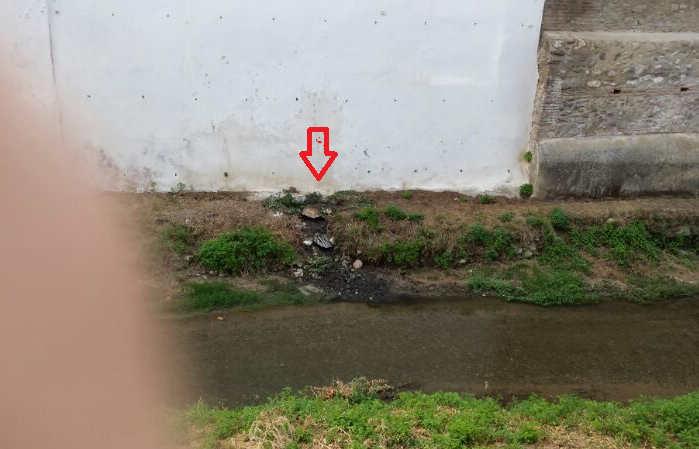 Aguas fecales domésticas vierten al Darro en plena travesía urbana.