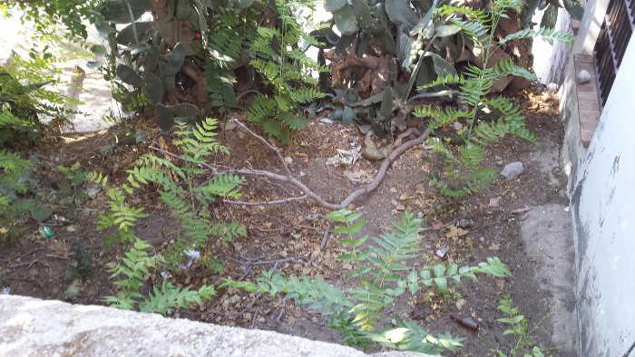 Estado del jardín del Zenete 2014