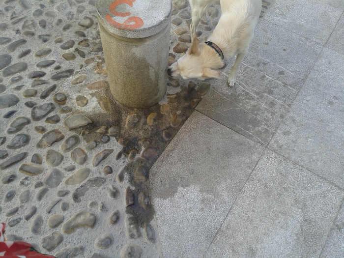 Meadas de perro en un hito de la Placeta del Almirante 20140909