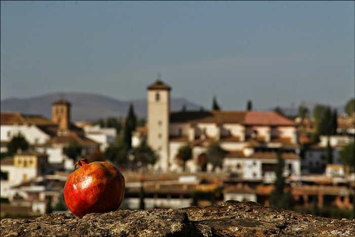 Fruto de los siglos Foto concurso 2014 Eloy Morales