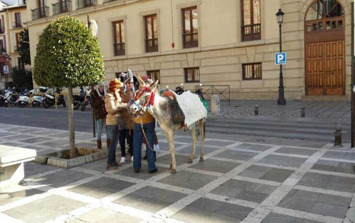 Despedidas de solteros con burro en Plaza Nueva