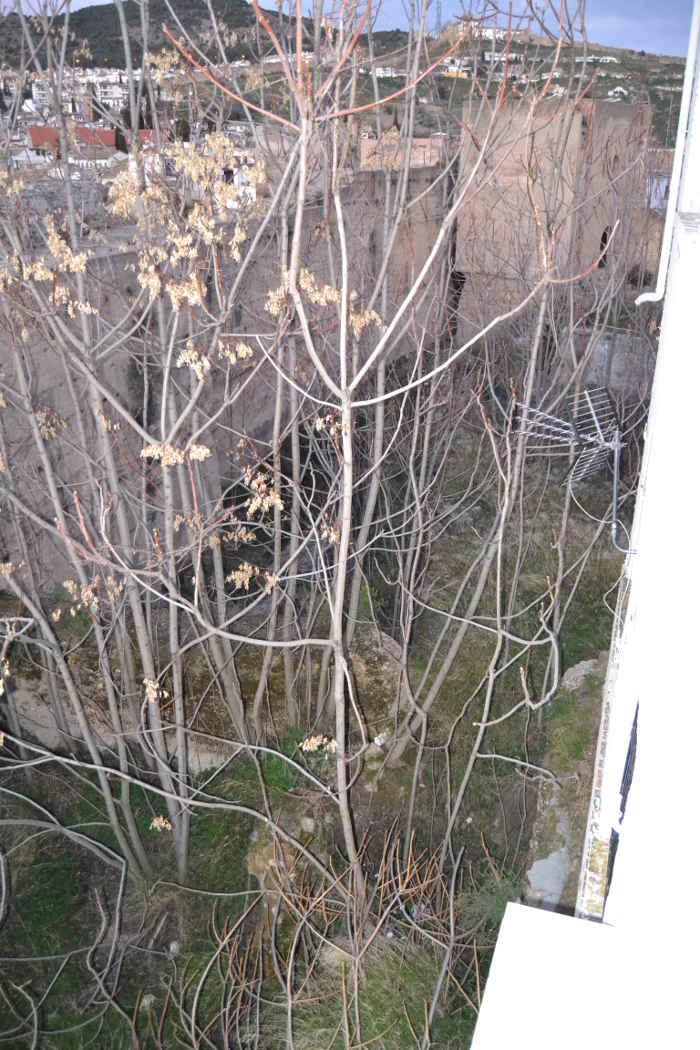 Muralla ziri vegetacion  20150125 c