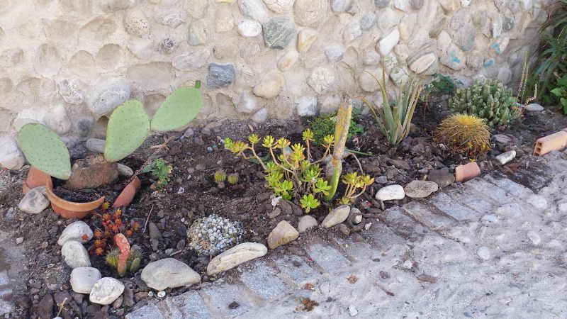Los vecinos de molino de la corteza arreglan ellos - Plantas para arriates ...