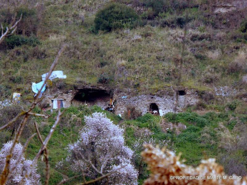 cuevas Avellano 2016 d