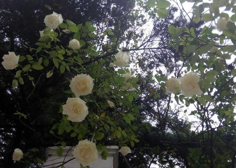 tapias albayzin mayo 2016 c