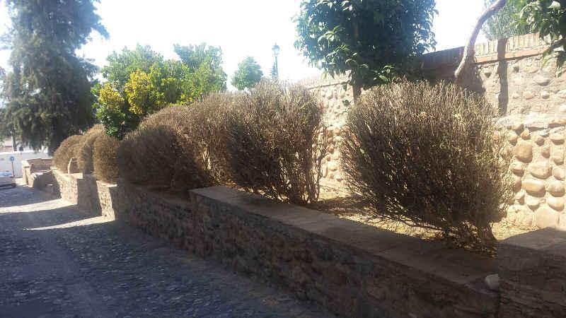 Plantas secas en el huerto del carlos y jard n vecinal for Asociacion de plantas en el huerto